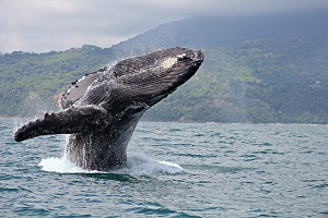 Paradise Management - WHALE WATCHING