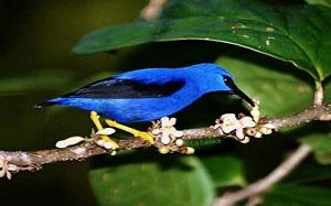 Paradise Management - BIRDWATCHING TOUR